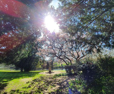 Blossom sun by the River Mole 28.3.20